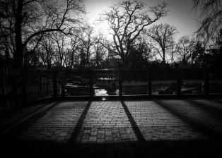 Shadow-Play-314x224.jpg